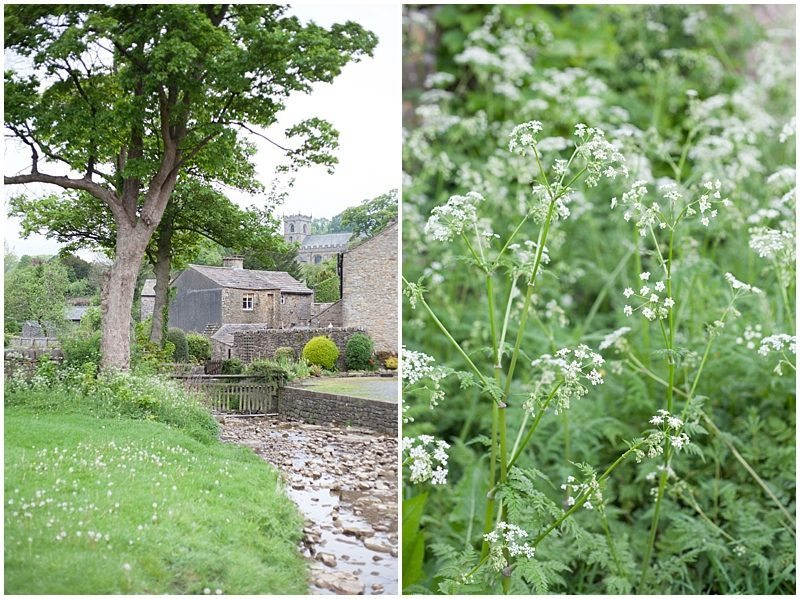 cow parsley by the brook in Downham