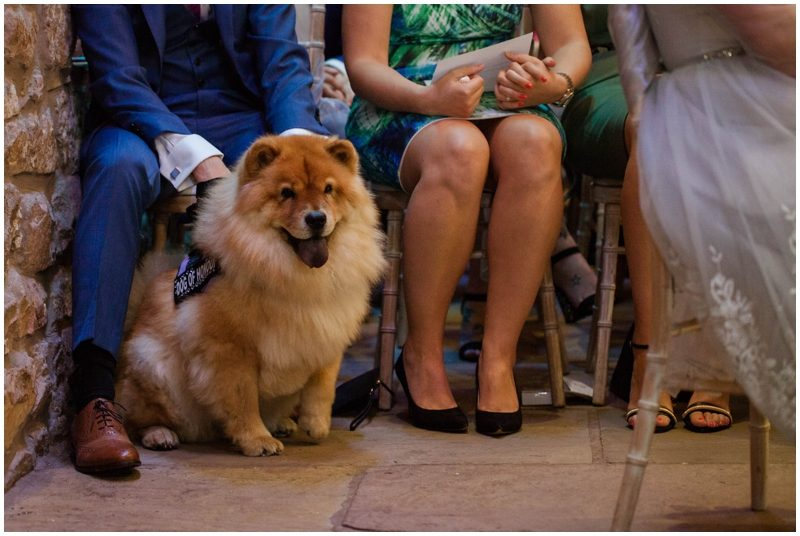 Roxy the chow chow watching her humans say I do