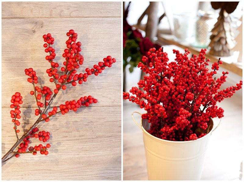 Red Ilix berries