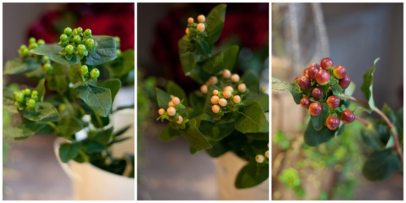 Green peach and red Hypericum berries